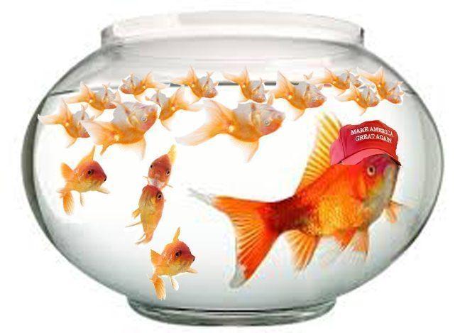 fish bowl images copy
