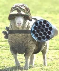sheepThesheepleareawake