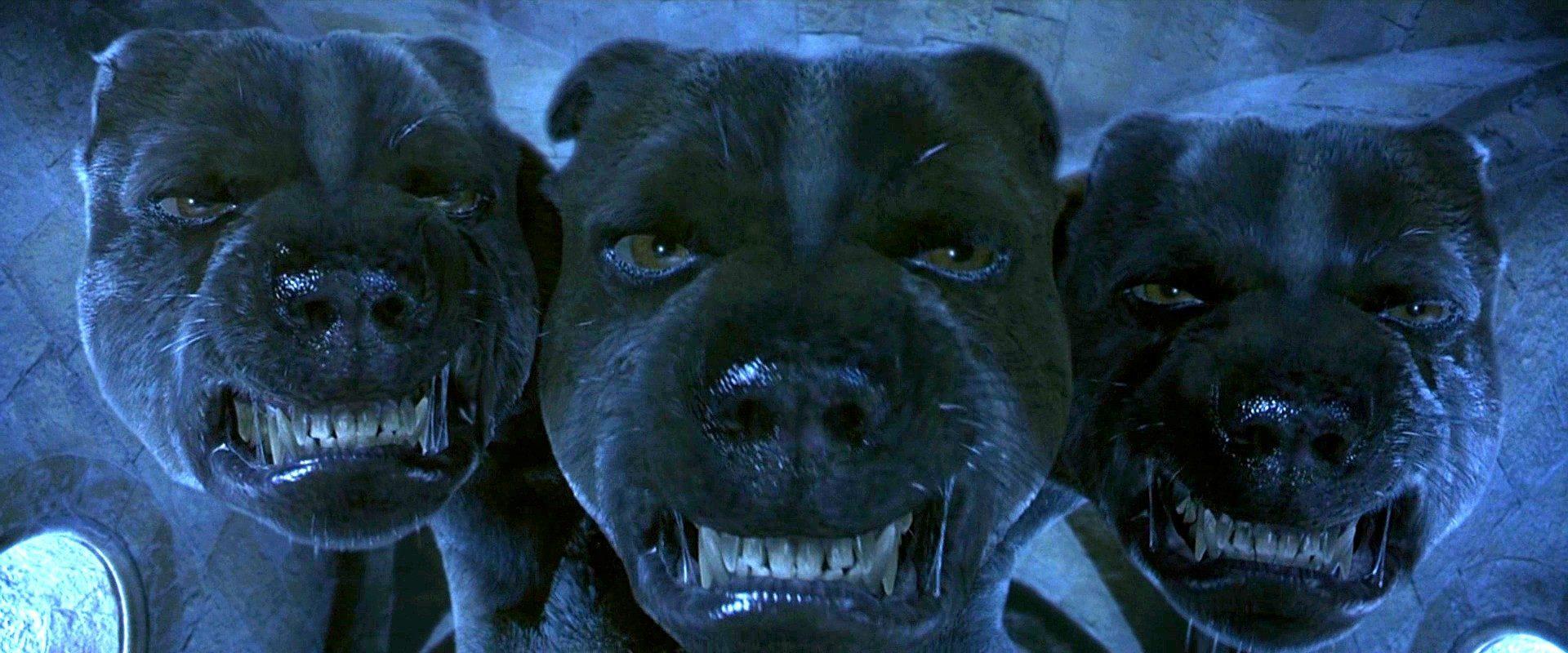 HOUNDS Fluffy-Harry-Potter-Hell-hound