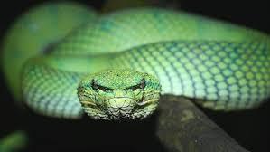 snakes imagesG1FW8DKJ