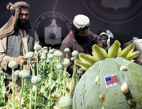 Afghan poppy farmers extract raw opium from poppy heads in fields in Zhera disrict west of Kandahar
