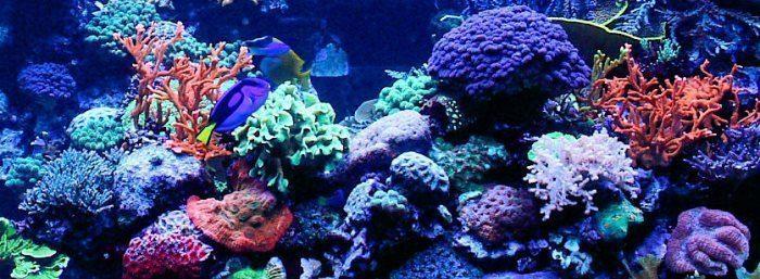 coral tmp711233548866027520