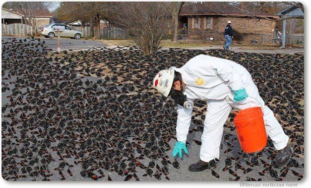 radiation blackbirds