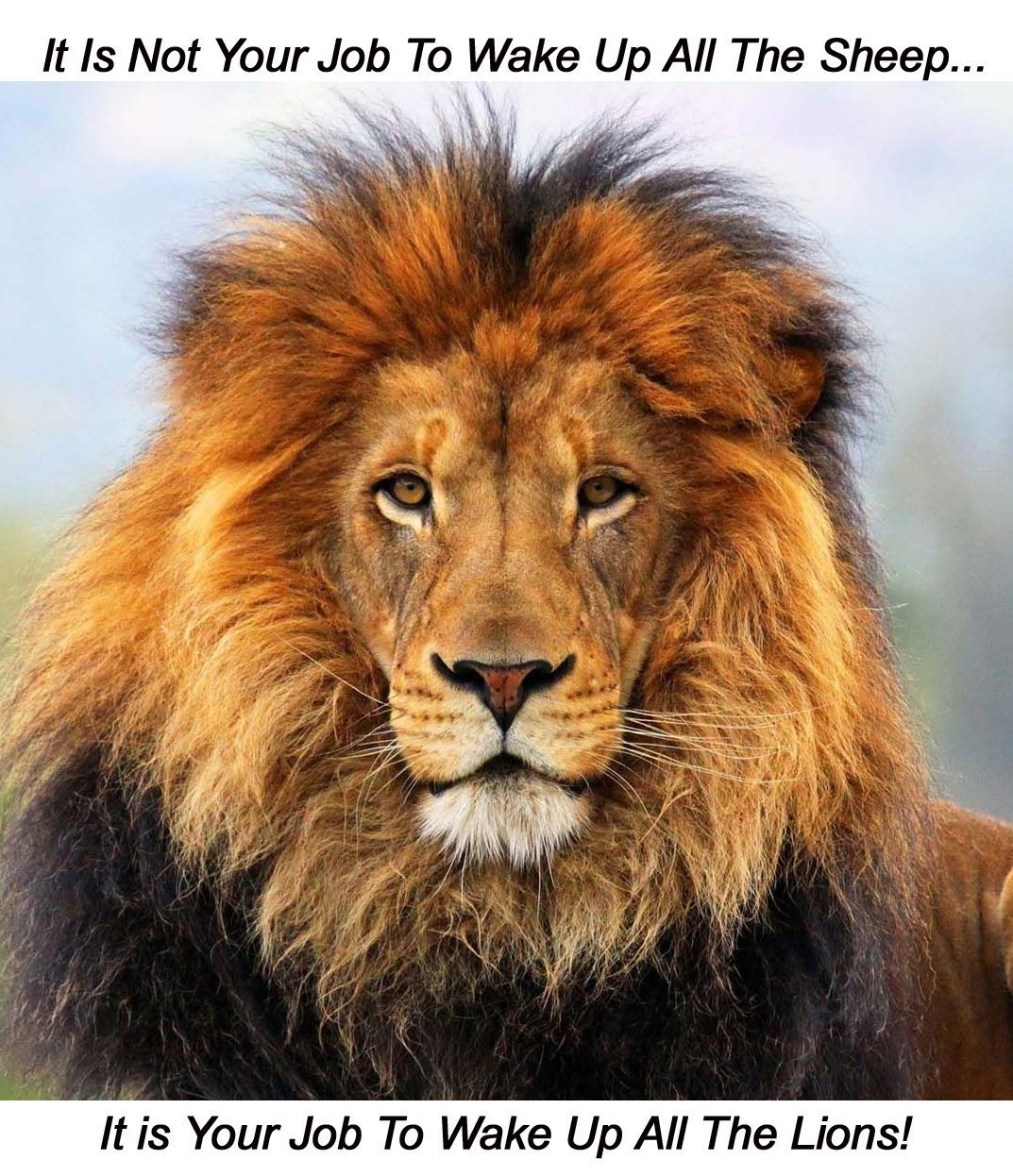 lion sheep heauntitled 2 copy