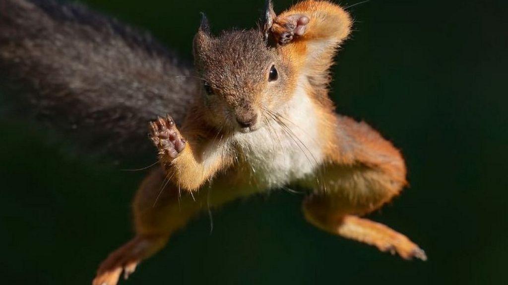 squirrel 109241057 mediaitem109241054