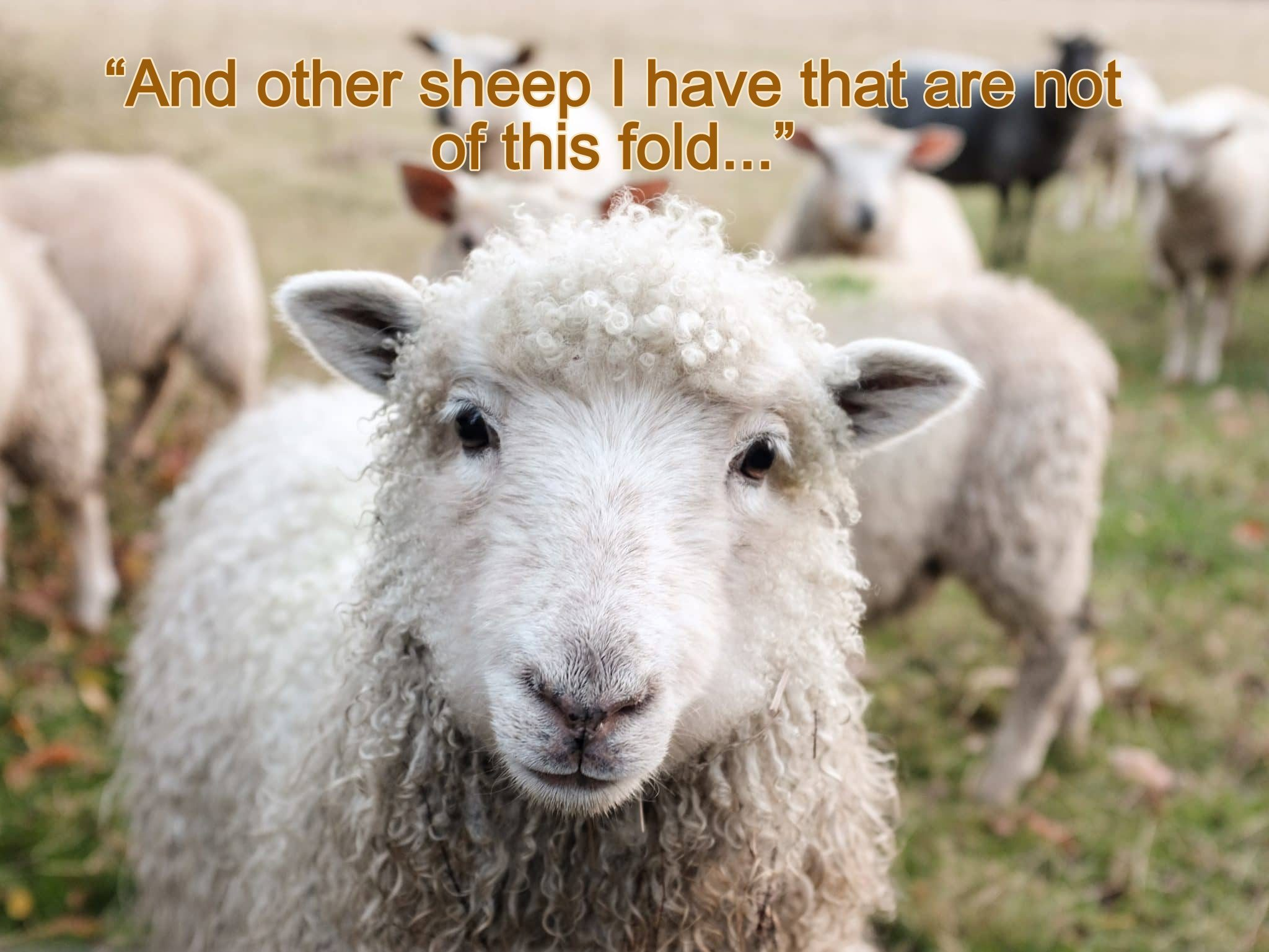 god sheep not of this fold