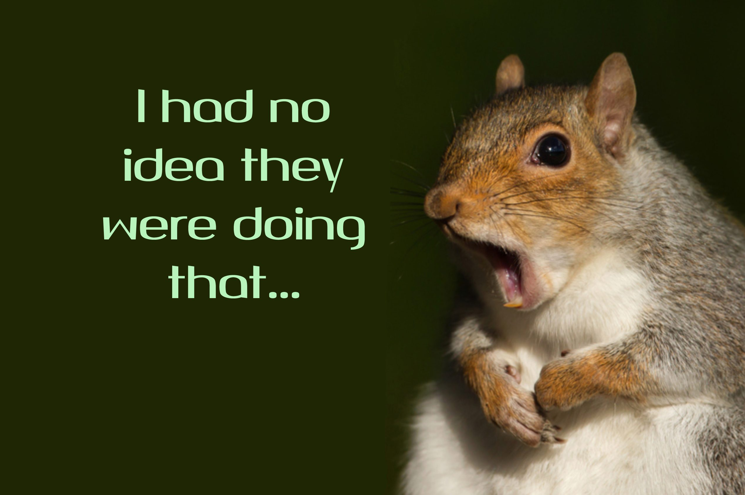 squirrel no idea