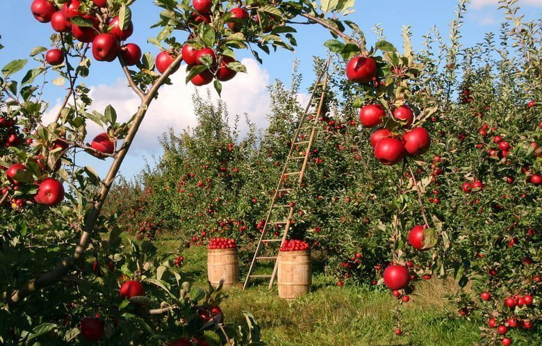 A MESSAGE TO THE LORD'S ORCHARD - FRUIT BEARING SEEDS