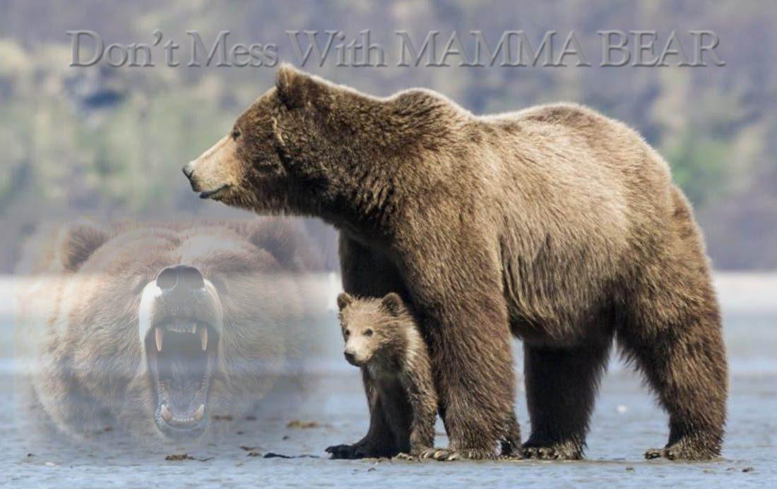 bear moma