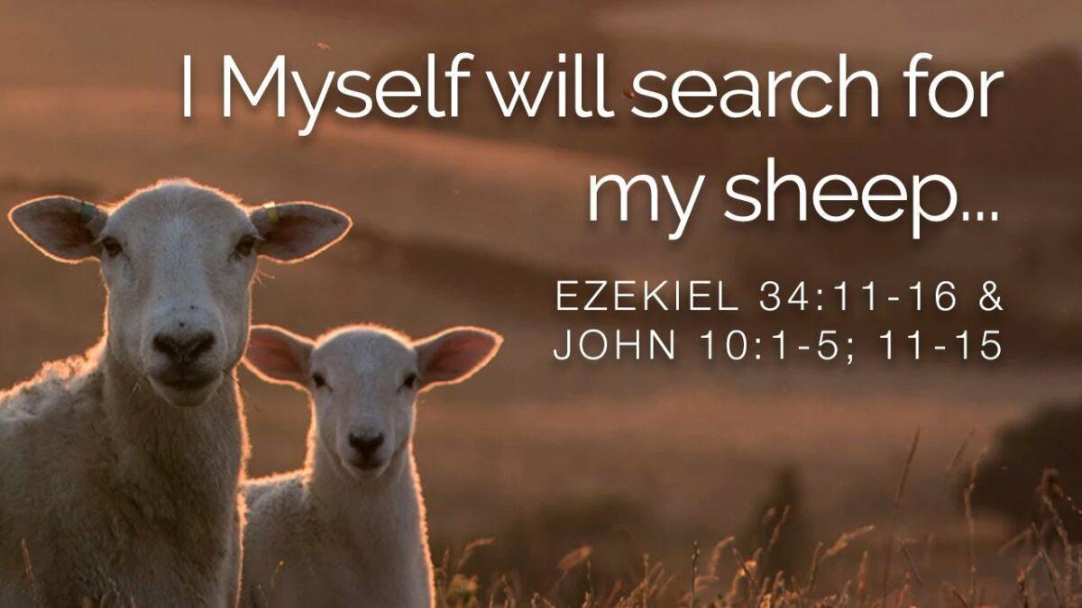 sheep maxresdefault