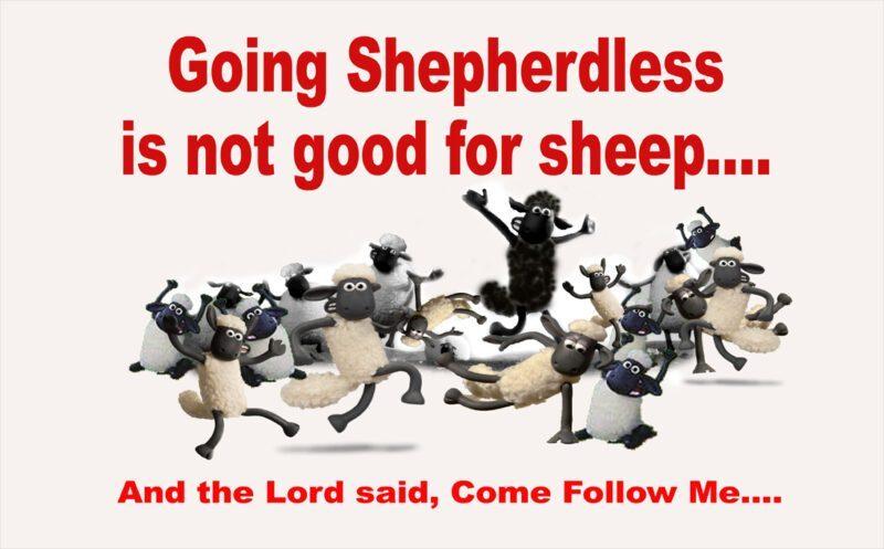 sheep shepherdless